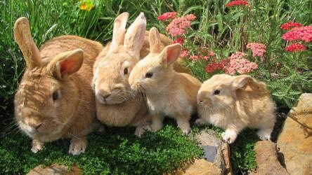 Cute Bunny Rabbit Wallpaper Hd Rabbits Themes Hd Wallpapers Backgrounds