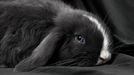 Cute Bunny Rabbit Wallpaper Hd Rabbits Themes Hd Wallpapers