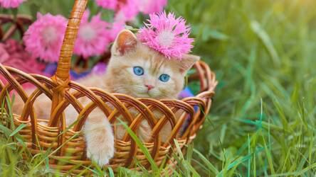 Cute Cats & Kittens Wallpaper HD Cat