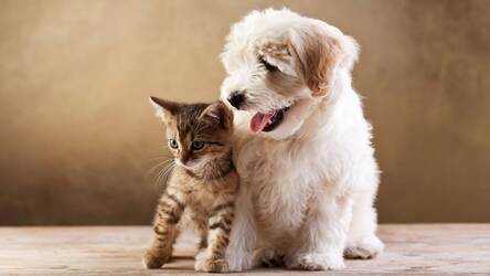 Cats Dogs Wallpaper Hd Cat Vs Dog Themes Hd Wallpapers