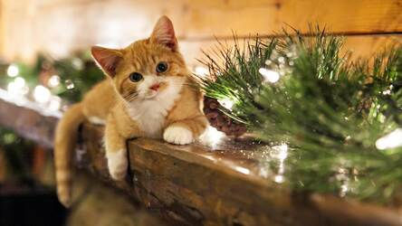Christmas Hd Wallpaper Puppies Kitten Themes Hd Wallpapers