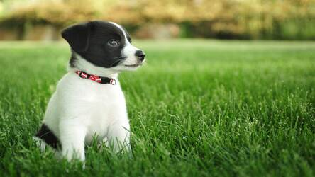 Cute Dogs Puppies Wallpapers Hd New Tab Hd Wallpapers Backgrounds