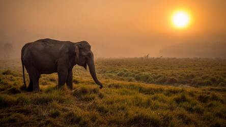 Elephant Wallpaper Hd New Tab Elephants Theme Hd