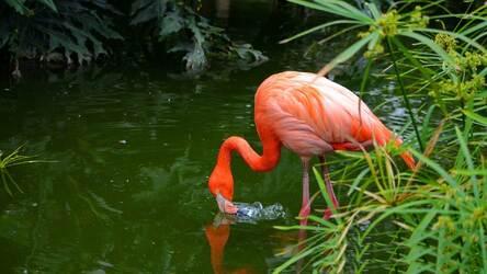 Flamingo Wallpaper Hd Flamingos New Tab Hd Wallpapers