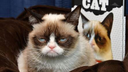 Grumpy Cat Hd Wallpapers New Tab Themes Hd Wallpapers