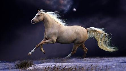 Horses Wallpaper Hd New Tab Horse Themes Hd Wallpapers Backgrounds