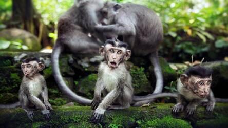 Monkey Wallpaper Hd New Tab Monkeys Themes Hd Wallpapers Images, Photos, Reviews