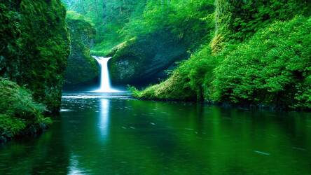 Nature Wallpapers HD New Tab Themes | HD Wallpapers