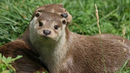 Otter Hd Wallpapers Otters New Tab Themes Hd Wallpapers