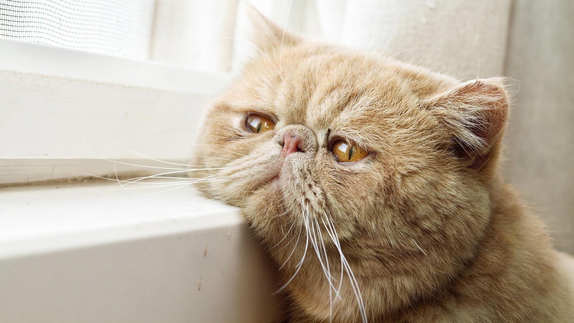 صورة لقط رائع ينظر من نافذة ويتأمل