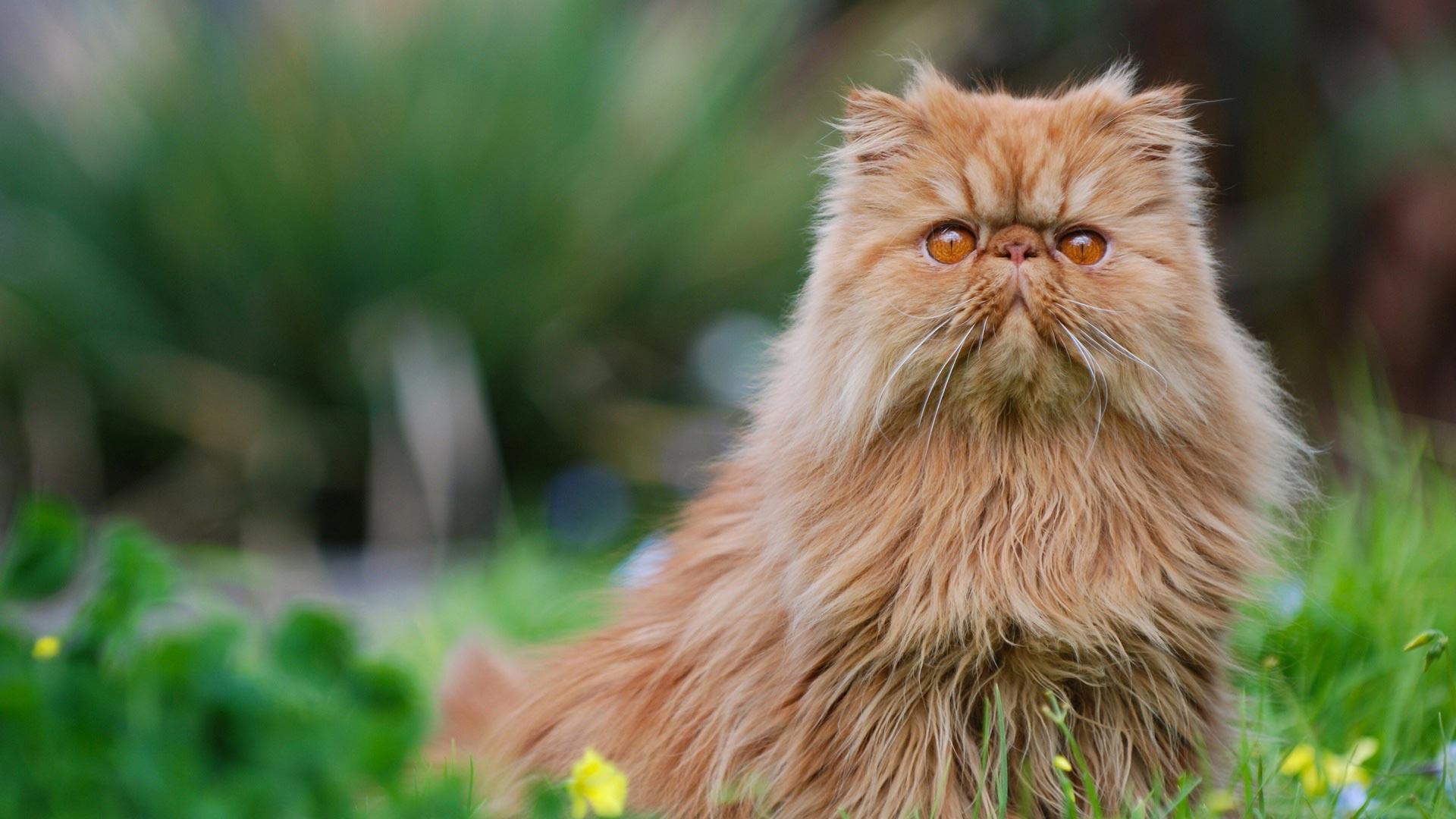 قطة بلون مميز ونوع رائع
