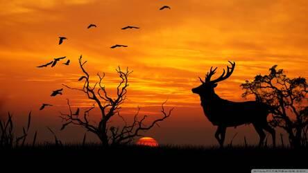 63 Wallpaper Hp Sunset HD Terbaik