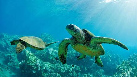 Turtle Wallpaper HD Turtles New Tab Themes | Image 2 / 50