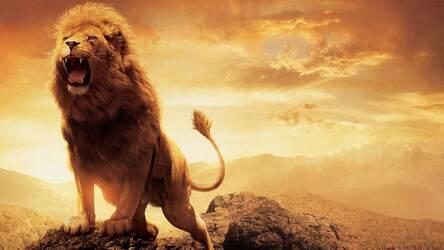 Wild Cats Wallpaper HD Lion-Tiger-Puma Themes | HD
