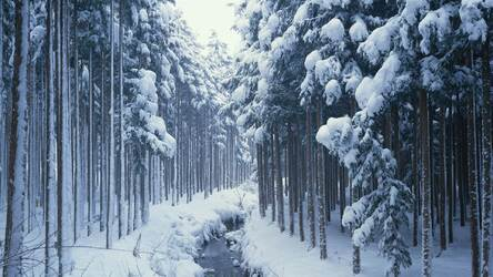 Winter & Snow Wallpapers HD New Tab Themes | Image 76 / 90