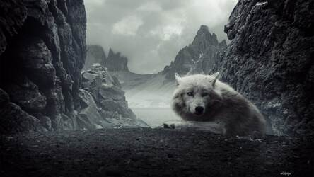 Wolf Wallpaper Hd New Tab Wolves Themes Hd Wallpapers Backgrounds
