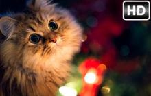 Cute Cats & Kittens Wallpaper HD Cat Themes