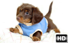 Cute Dogs & Puppies Wallpapers HD New Tab