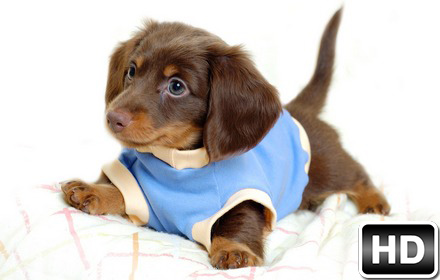 Cute Dog Breeds Wallpapers New Tab