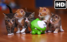 Baby Animals Wallpapers HD New Tab Themes