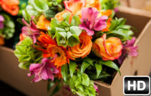 Flowers Wallpapers HD New Tab – Flower Themes