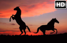 Horses Wallpaper HD New Tab – Horse Themes