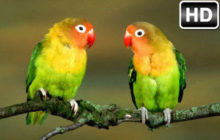 Birds Wallpaper HD New Tab – Bird Themes