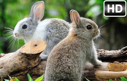 Cute Bunny Rabbit Wallpaper HD Rabbits Themes | HD ...