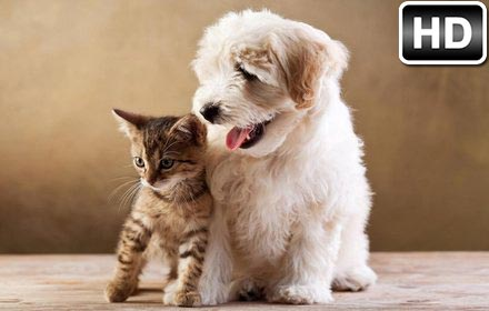 Cats Dogs Wallpaper Hd Cat Vs Dog Themes Hd Wallpapers Backgrounds