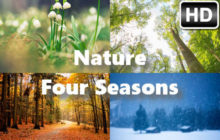 Spring Summer Fall Winter – Nature Four Seasons