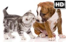 Kittens & Puppies HD Kitten vs Puppy Themes