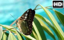 Butterfly Wallpaper HD Butterflies New Tab