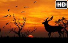 Sunset Wallpaper Sunsets HD New Tab Themes