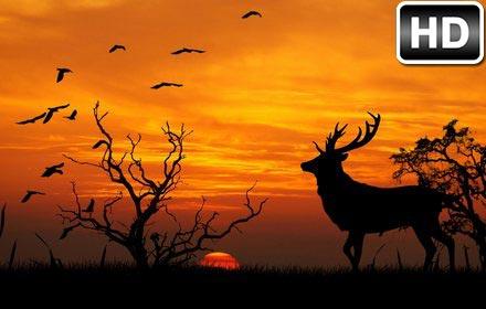 Sunset Wallpaper Sunsets Hd New Tab Themes Free Addons
