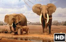 Elephant Wallpaper HD New Tab Elephants Theme