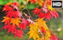Autumn Wallpaper HD New Tab Fall Themes