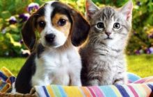 Dogs vs Cats: Which One Makes a Better Pet in Our Home?