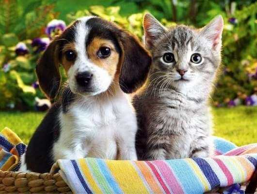 dogs vs cats which one makes a better pet in our home