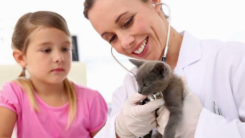 kitten care 2