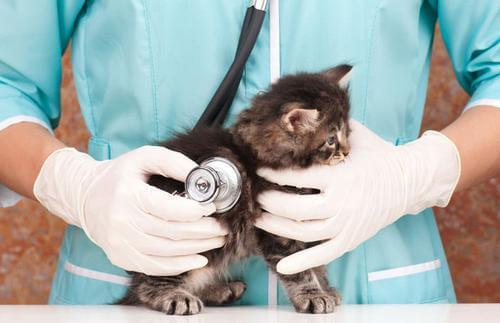 kitten care 7