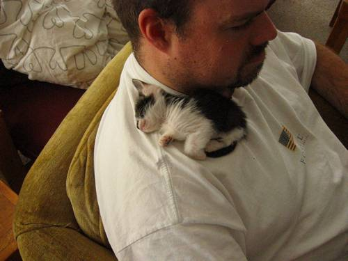 kitten care 8
