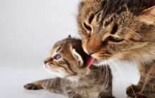 The Top 25 Tips of Kitten Care for a Future Lovely Cat