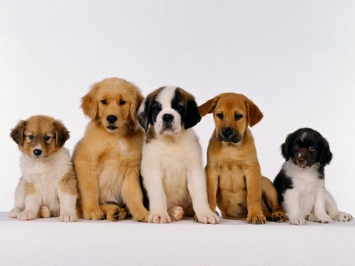 puppy training 1