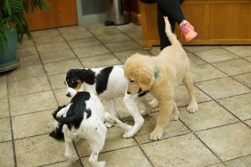 puppy training 5