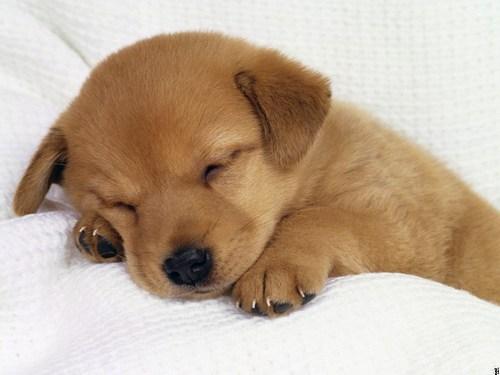 puppy training 7