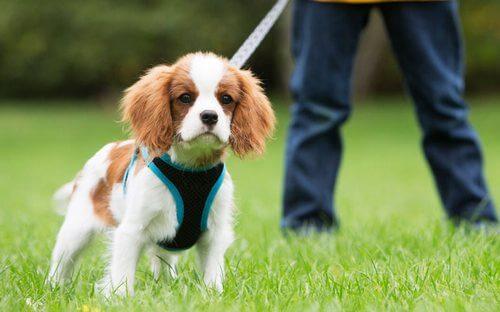puppy training 9