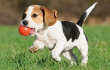 The Ultimate Top 30 Tips of Puppy Training for a future Gentlemen Dog