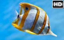 Fish Wallpapers HD New Tab Themes