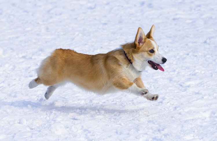 cutest dogs 10