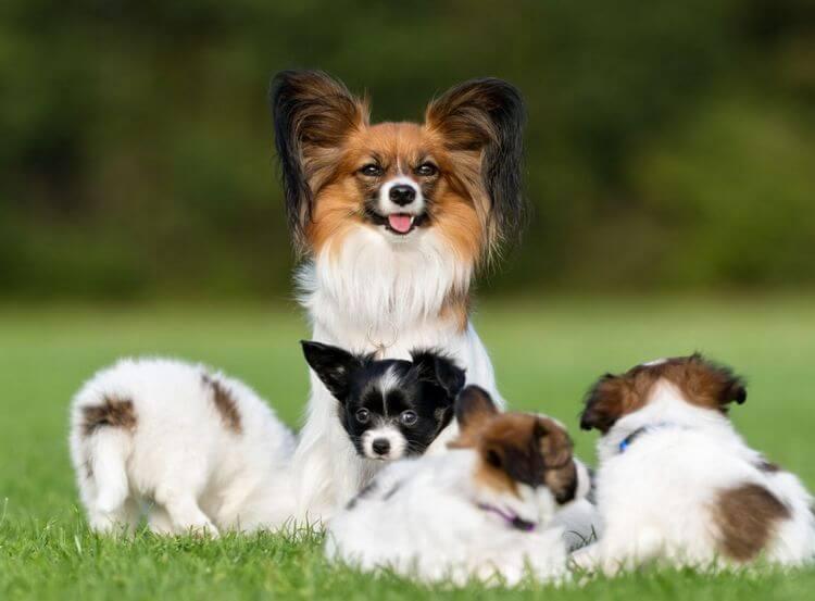 cutest dogs 11
